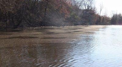 sawdust in blackwater river